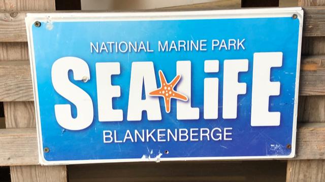 Blankenbergse Strandvondsten trakteert de dieren van Sea Life